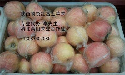 陕西洛川红富士苹果价格/冷库红富士苹果批图片