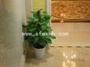 北京办公室绿色植物租赁公司