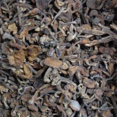 森华源榛蘑批发大森林食品榛蘑批发东北特产