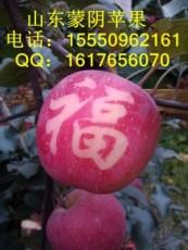 山东蒙阴苹果供应