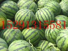 2014西瓜价格