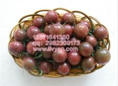 黑珍珠番茄種子/黑色番茄種子/進口黑番茄