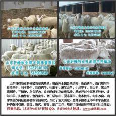福建地區適合養杜寒雜交品種的羊嗎
