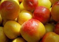 采摘园五玄水果供应桃子量大优惠