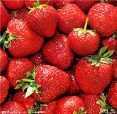 五玄果蔬采摘园低价批发草莓-草莓种植基地