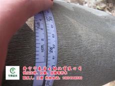 6公分法桐报价江苏徐州法桐价格