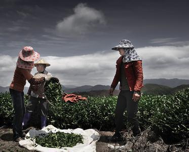 正宗西湖龙井茶专卖 特产龙井茶批发价格