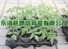 提供优质蔬菜育苗