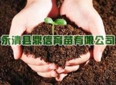 直销优质蔬菜育苗