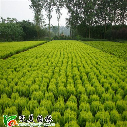 深圳园林绿化公司图片,深圳行业园林绿化图片