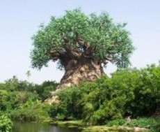 大連環境藝術 樹木和景石的合理搭配