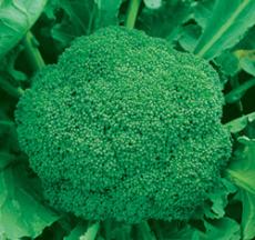 厚街蔬菜配送公司 厚街食堂蔬菜配送公司