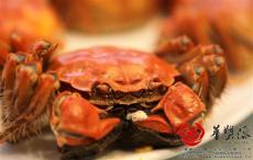 什么是陽澄湖大閘蟹的標準化網圍養殖生產