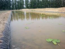 平顶山哪里卖莲菜地膜养鱼池塘防渗膜塑料布